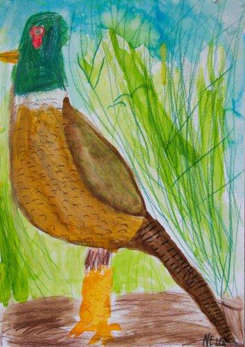 7. Nela Hlávková, 6 let - Bažant schovaný v trávě