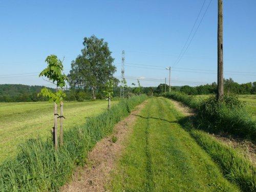 Alej medonosných dřevin – Albrechtice, okr. Karviná