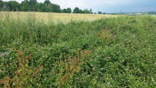 Nektarodárný biopás – Albrechtice, okr. Karviná