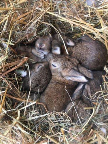 Odchov králíků divokých – MS Ivančice